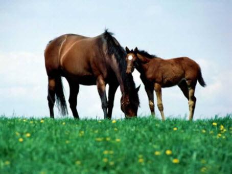 Horseback Riding Lessons  Oak Meadows Ranch Wildomar California