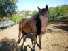Cody (Rescued Horse)