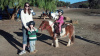 Mini Horse for Parties and Lessons